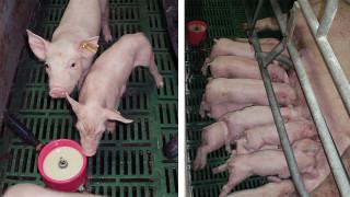 el-suplemento-lacteo-no-sustituye-la-leche-de-la-madre-sino-que-la-complementa_105531